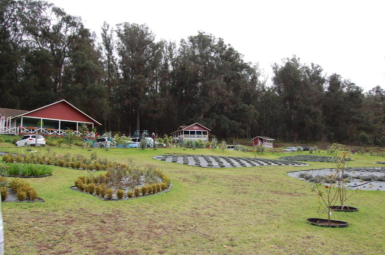 The lavender farm - Maui