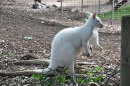 Photo of Sydney Blue Mountains Nature and Wildlife Day Tour from Sydney Winter coat kangaroo