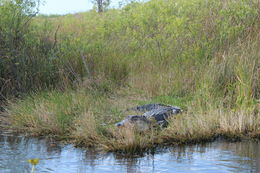 A perfect day for touring the Everglades. Photo taken by alamelu, IReport.cnn , venky - February 2015