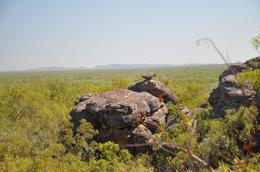 Photo of Darwin Kakadu, Nourlangie and Yellow Waters Tour with Optional Return Flight to Darwin Beautiful Kakadoo!