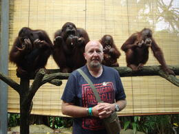 Photo of Singapore Singapore Zoo Morning Tour with optional Jungle Breakfast amongst Orangutans Breakfast with the Orangutangs