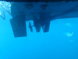 Photo of Barbados Atlantis Submarine Expedition Tour Getting to the bottom of things!