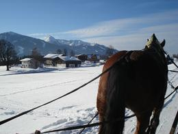 Photo of Salzburg Christmas Horse-Drawn Sleigh Ride from Salzburg Hard working horses