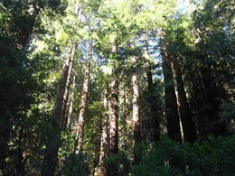 Photo of Napa & Sonoma San Francisco Supersaver: Muir Woods and Wine Country Tour Muir Woods