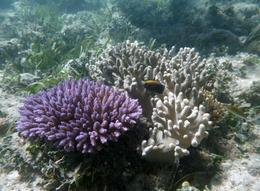 Part of the coral garden off the patrolled beach Green Island , Gregory W - May 2012