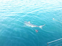Photo of Cape Town Cage Diving with Great White Sharks from Cape Town And goes