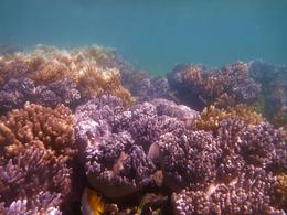 Part of the extensive coral gardens surrounding Green Island , Gregory W - May 2012