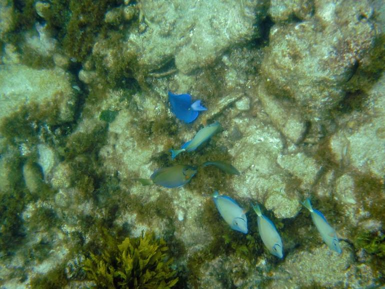 Fish during snorkeling we observed - Philipsburg