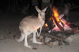 You sit around and per kangaroos for at least 20 minutes!, Jodie A - October 2007