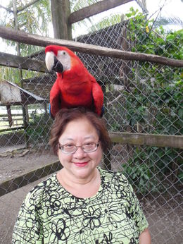 Photo of   Macaw on my head