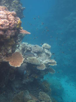 View of the Reef , Jennifer A - December 2011