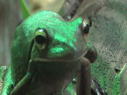 Photo of Sydney Skip the Line: WILD LIFE Sydney Entrance Ticket Cool FRog!