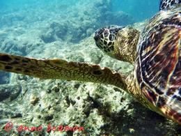 Photo of Oahu Hanauma Bay Snorkeling Adventure Half-Day Tour Hanauma Bay Snorkeling Adventure