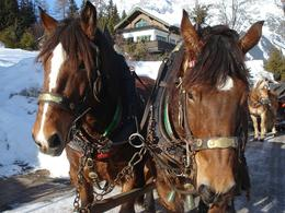 Our gorgeous hard working horses., Sian D - January 2008
