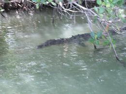 Photo of Negril Black River, YS Falls and Appleton Rum Estate Day Trip from Negril Crocodile
