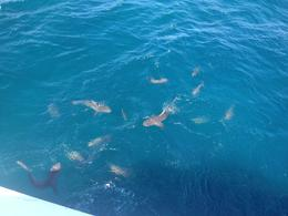 Photo of Cairns & the Tropical North Ultimate 3-Day Great Barrier Reef Cruise Pass Sharks and fish