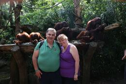 Photo of Singapore Singapore Zoo Morning Tour with optional Jungle Breakfast amongst Orangutans Breakfast with Orangutans