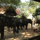 Photo of Pattaya Elephant Ride and Jungle Trek Half-Day Tour from Pattaya The Elephant is waiting