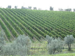 Photo of Florence Chianti Region Wine-Tasting and Dinner Half-Day Trip from Florence vinmark