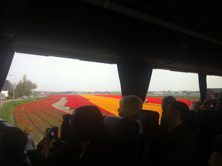 Tulip Fields Day Trip from Amsterdam - Amsterdam
