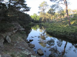 Photo of Sydney Australian Wildlife 4WD Tour from Sydney Searching for more Platypus