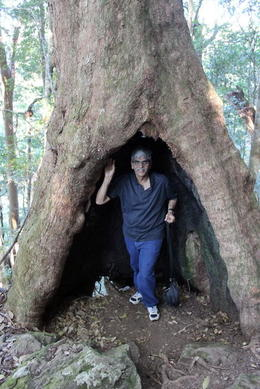 Photo of Brisbane Springbrook National Park Discovery Full-Day Bushwalk including Glow Worm Tour Old trees some even 3000 years old!