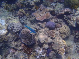 Photo of Cairns & the Tropical North Great Barrier Reef Diving and Snorkeling Cruise from Cairns PC260072