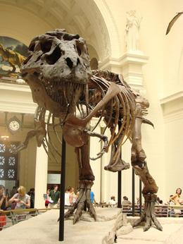Photo of Chicago Chicago CityPass Sue the T-Rex (largest one found to date)