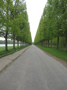 Photo of Paris Versailles by Bike Day Tour the road we biked down