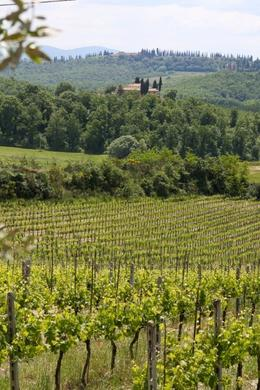 Photo of Florence Tuscany in One Day Sightseeing Tour Tuscan Winery