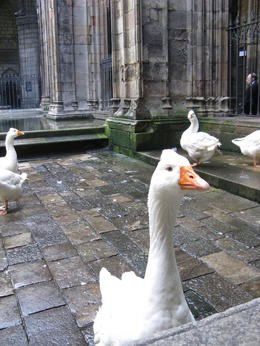 Geese in a Cathedral??? Only one of the amazing sites in an amazing city. , Judi - May 2011