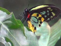 Photo of Sydney Skip the Line: WILD LIFE Sydney Entrance Ticket Butterfly House