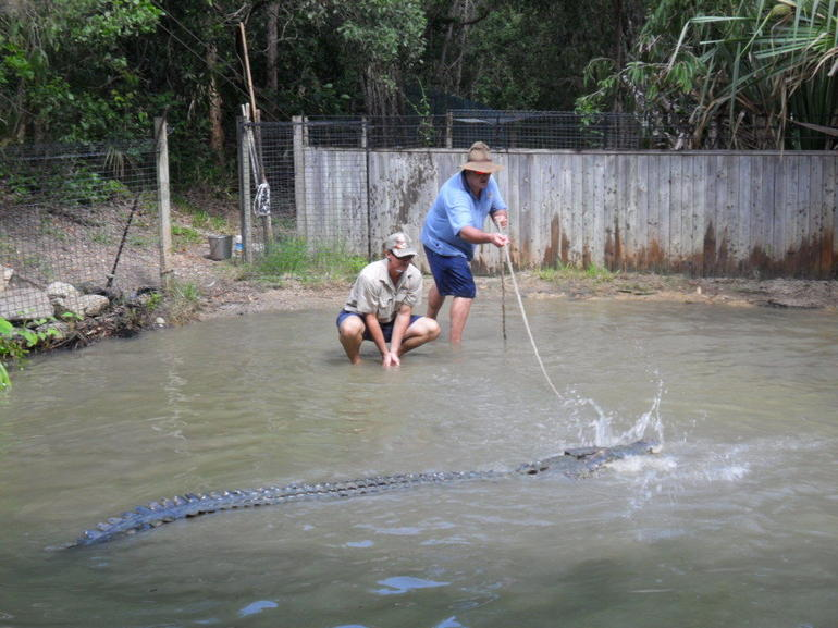 Fishing a crocodile
