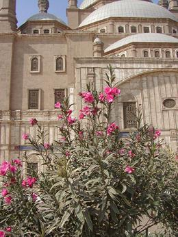 This bush with the fragrant flowers were impressive with the Mosque as the background, Cynthia S - January 2009