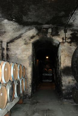 Photo of Florence Chianti Region Wine Tasting Half-Day Trip from Florence Wine cellar