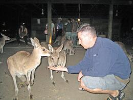 There is kangaroo feed. And you don't feed them people food!, Jodie A - October 2007