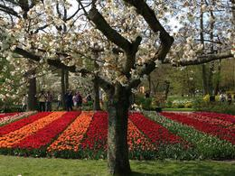 Photo of Amsterdam Keukenhof Gardens and Tulip Fields Tour from Amsterdam Mélange de couleur