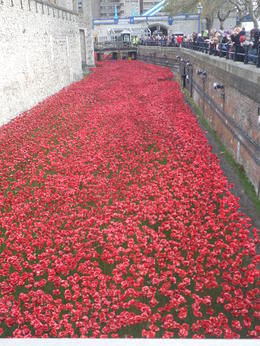 Poppies were amazing , Tammy H - November 2014