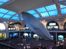 Photo of New York City American Museum of Natural History la baleine.
