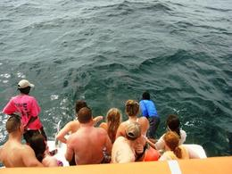 Photo of Nassau Nassau Snorkel Bahamas Adventure Shark feeding