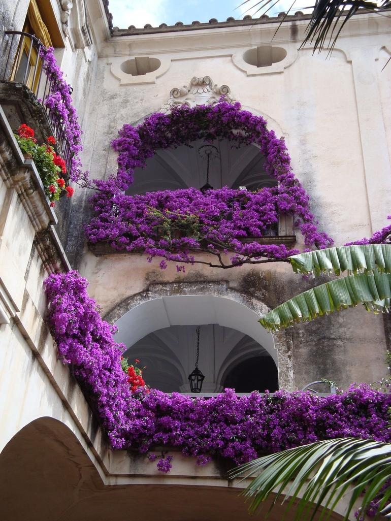 The Purple Flowers! - Rome