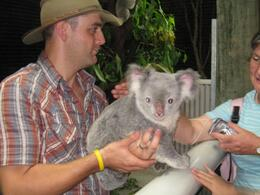 Photo of Cairns & the Tropical North Cairns Night Zoo Safari and Barbecue Dinner Time to pet the koalas