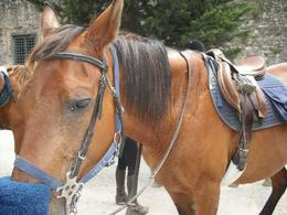 Photo of Florence Horse Riding in Chianti Day Trip from Florence Tuscany by Horse