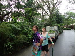 Photo of Singapore Singapore Zoo Morning Tour with optional Jungle Breakfast amongst Orangutans Watching the Orangutangs right above