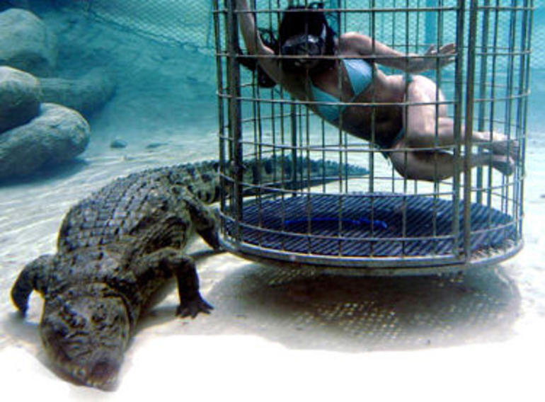 Nile Crocodile Diving - South Africa