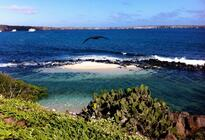 Photo of Galapagos Islands Genovesa Island