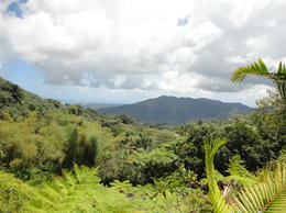 El Yunque - 4/7/12 , Brooks W - April 2012
