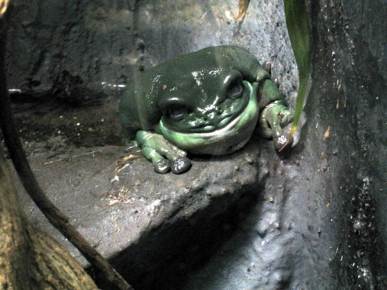Frog at the Cairns Zoo - Cairns & the Tropical North