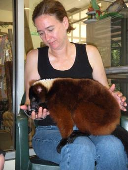 This particular Lemur seems to like Sue a lot and spend lots of time on her knees - she loved it! - June 2009