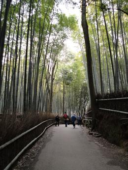Photo of Kyoto Arashiyama and Sagano Morning Walking Tour Sagano